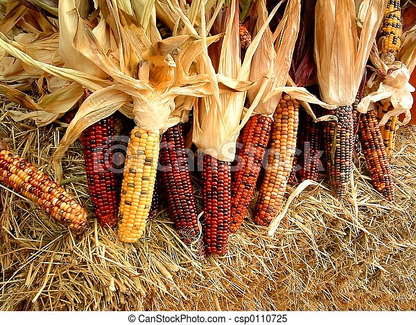 Indian Corn Stalks Of Dried Indian Corn On A Bale Of Hay