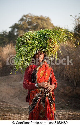 Indian villager woman carrying gree - csp8453489