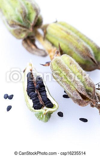 Etwas Neues genug Indischer sesam, pflanze, schwarz, auf, geschlossene. Pflanze @RV_22