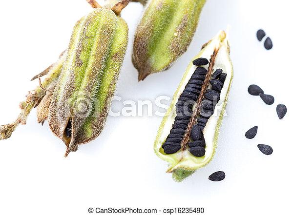 Super Indischer sesam, pflanze, schwarz, auf, geschlossene. Pflanze &CX_66