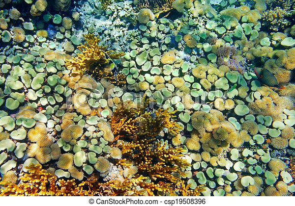 Coral colorido con corales duros en el fondo del mar tropical Indonesia, isla Menjangan. Foto submarina - csp19508396