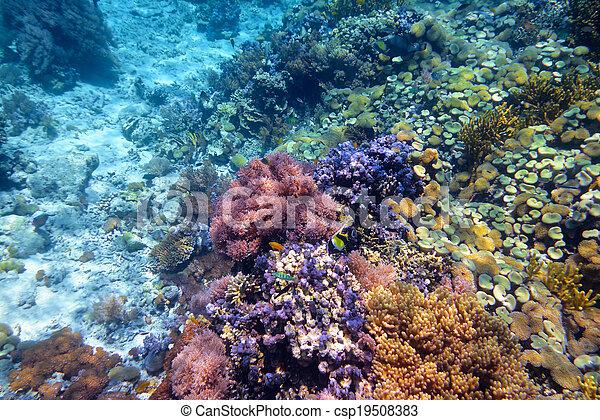 Coral colorido con corales duros en el fondo del mar tropical Indonesia, isla Menjangan. Foto submarina - csp19508383