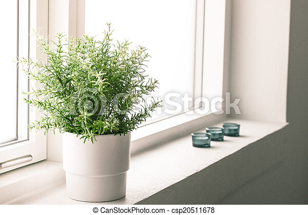 Indoor plant in a bathroom window - csp20511678