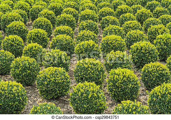 industriel, croissance, box-trees - csp29843751
