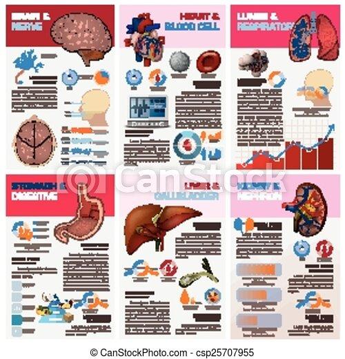 infographic, organ, läkar tablå, diagram, inre, hälsa, mänsklig - csp25707955