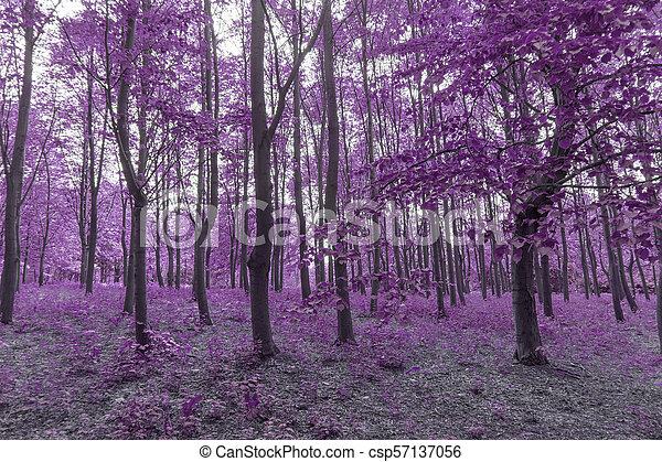 Infra red forest in purple colors - csp57137056