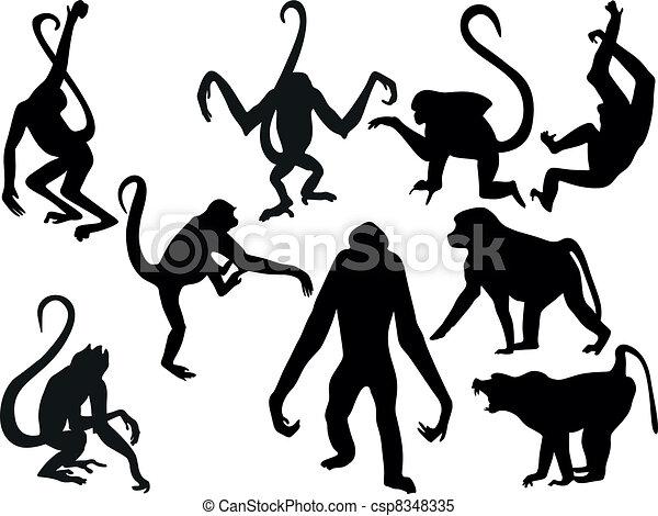 inkasować, sylwetka, wektor, -, małpa - csp8348335