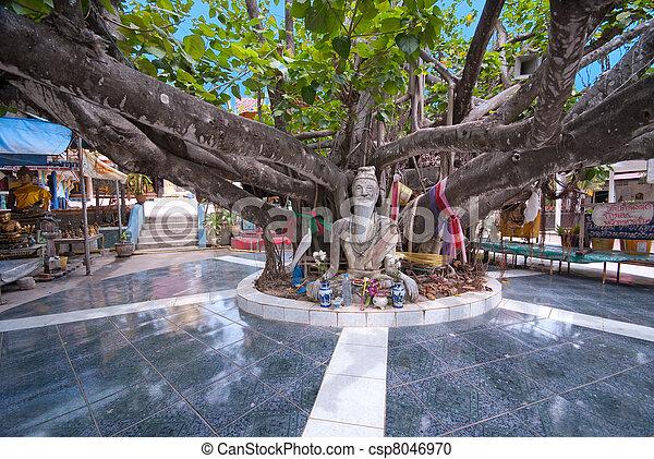 Enorme árbol en wat phra yai templo, koh samui, thailand - csp8046970