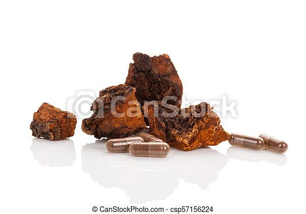 Inonotus obliquus, chaga chunks isolated. - csp57156224