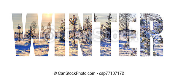 Inscription winter on the background of a frosty day with Christmas trees and the sun - csp77107172
