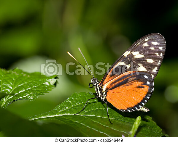 insect 007 butterfly - csp0246449