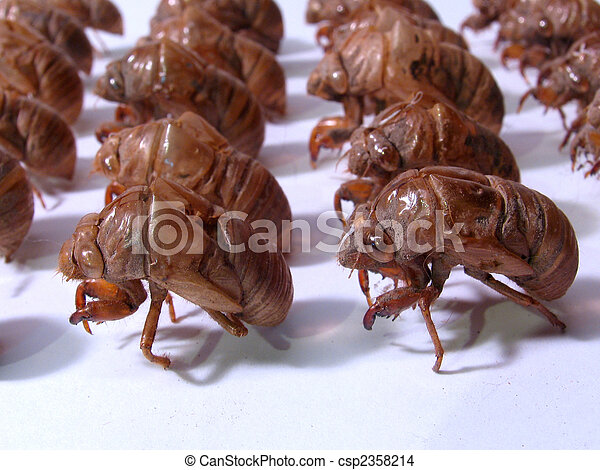 Insect Army: Military Cicada shells - csp2358214