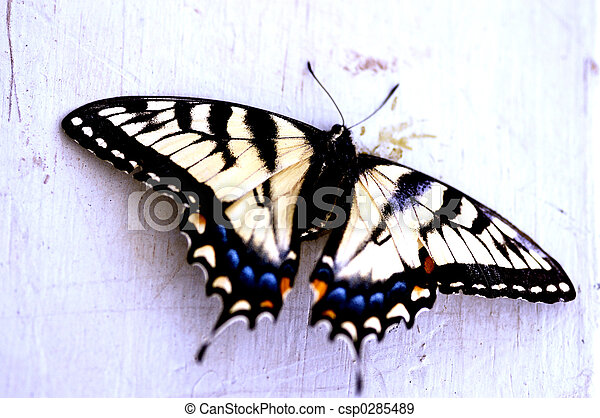 Insect - Butterfly - csp0285489