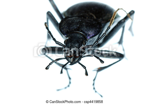 insect ground beetle bug - csp4419858