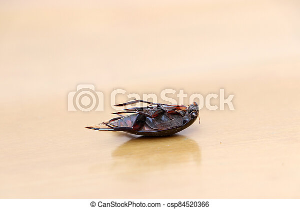Insect lie supine on the wooden floor. It is the large insect. - csp84520366