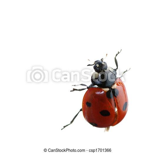 Insect - csp1701366