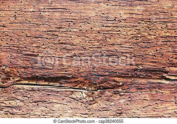 insectes de bois cheap ce coloptre dont la femelle mesure mm de longueur luge adulte pond ses. Black Bedroom Furniture Sets. Home Design Ideas