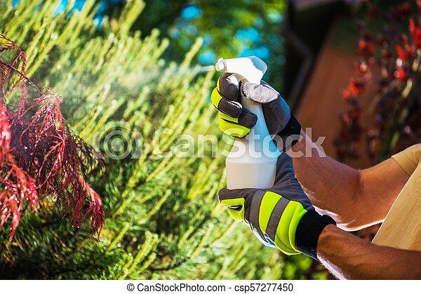 Insecticide Garden Plants - csp57277450