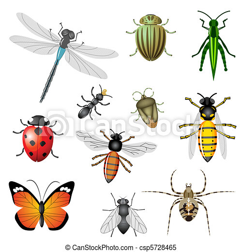 Insectos, o, bichos. 11, conjunto, insectos, colección, pedazos ...