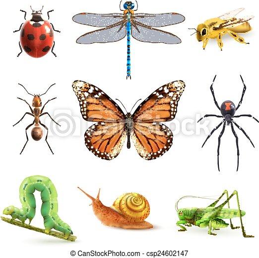 Insectos, realista, conjunto. Decorativo, mariquita, conjunto ...