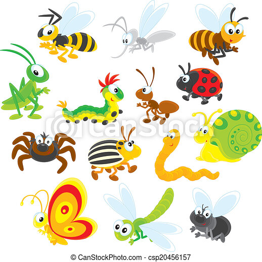 Insects - csp20456157