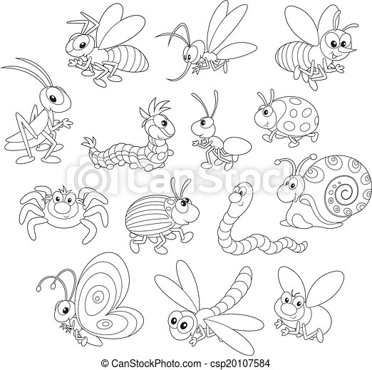 Insects - csp20107584