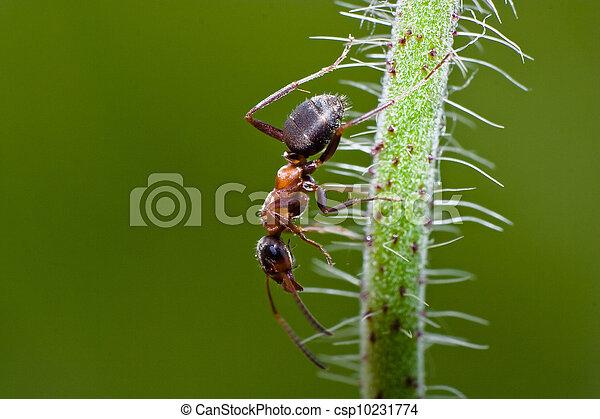 insekt - csp10231774