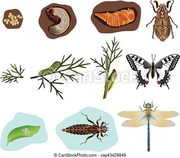 insekten metamorphose papillon libelle stadien metamorphose k fer. Black Bedroom Furniture Sets. Home Design Ideas