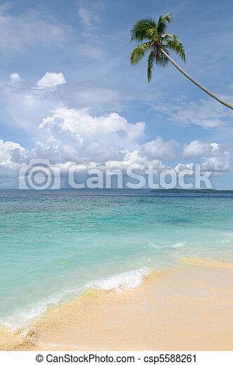 insel, -, bäume, tropische , handfläche, meer, himmelsgewölbe - csp5588261