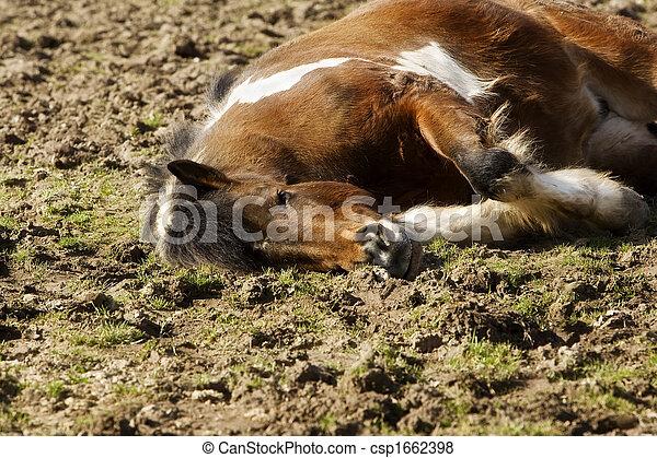 insel, pony - csp1662398