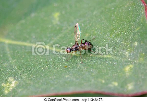 Insetti mosche foglie tipo insetti leaf chiamato - Mosche verdi ...