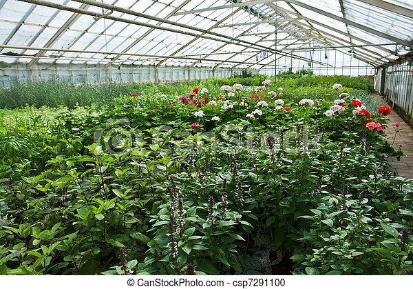 Inside a greenhouse full of plants and flowers - csp7291100