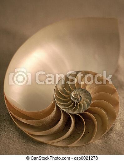 Inside of Nautilus - csp0021278