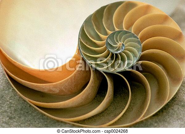 Inside of Nautilus - csp0024268