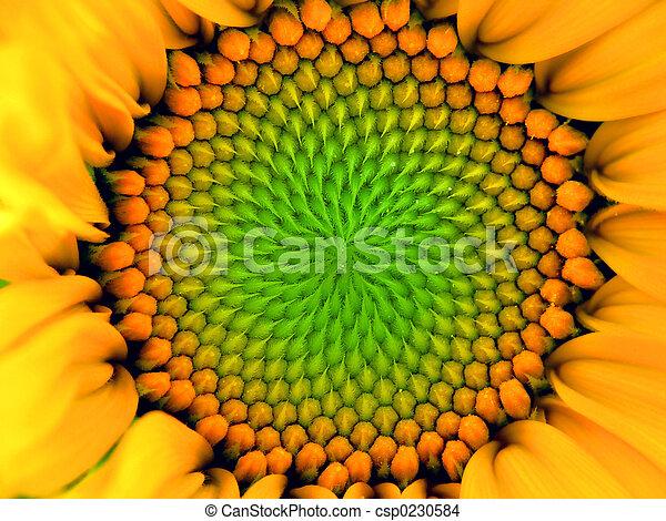 inside Sunflower - csp0230584