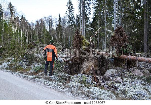 Inspecting fallen trees - csp17968067