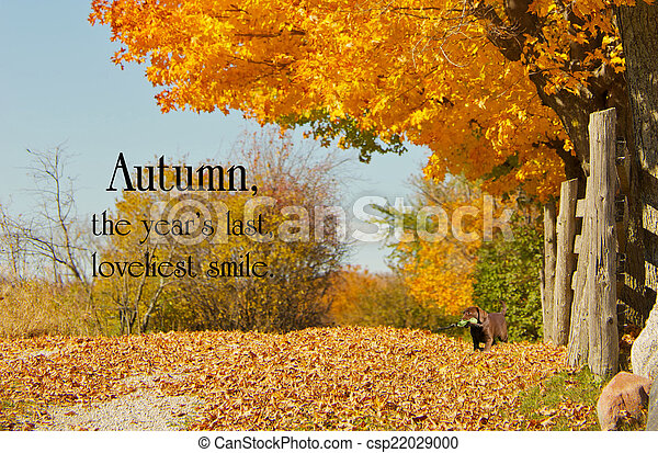 Inspirational Quote On Autumn By William Cullen Bryant On A Background With  A Beautiful Fall Lane Stock Photo