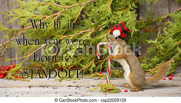 Inspirational quote on individuality by Dr. Suess with a little squirrel proudly wearing his Christmas hat, holding a candy cane in the winter. - csp22029129