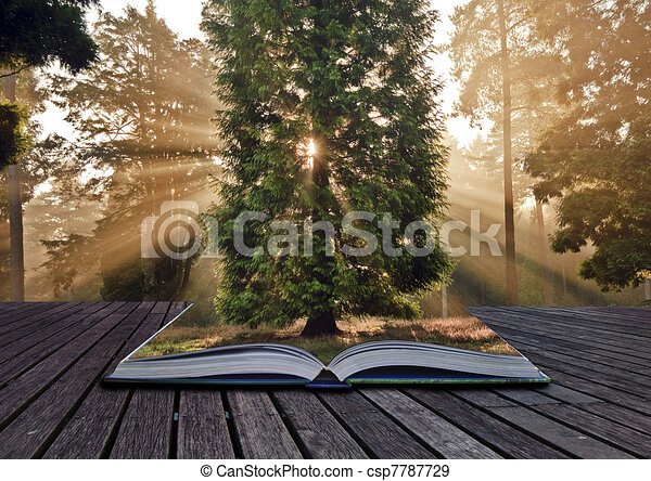 Inspirational sunbeams Autumn Fall forest landscape coming out o - csp7787729