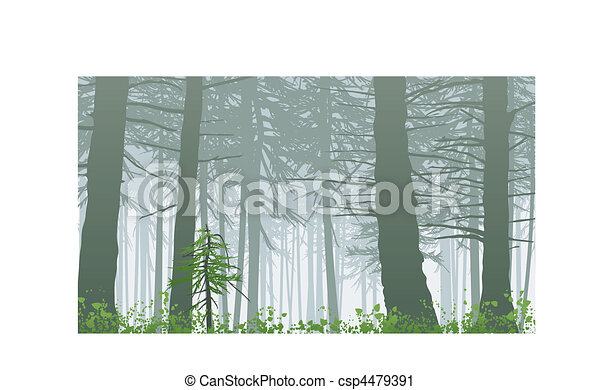 inspiring misty rainforest scene on mount maxwell - csp4479391