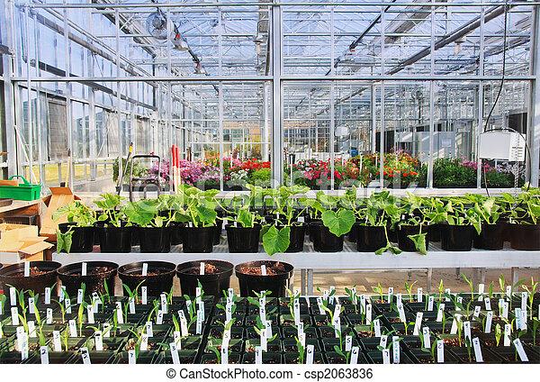 Intérieur, serre. Intérieur, experiments., agriculture,... image de ...