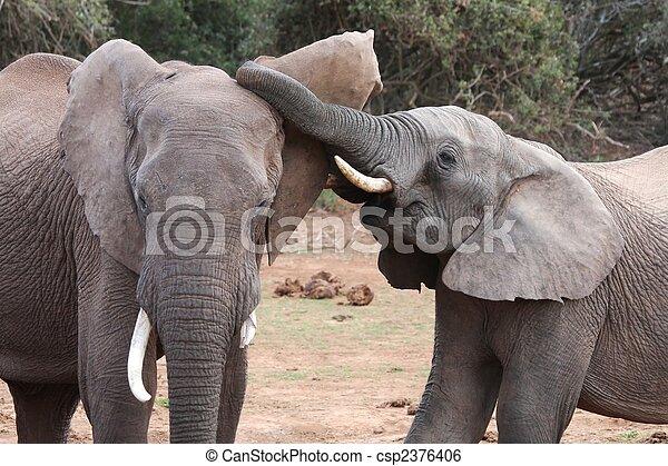 Interacción de elefantes africanos - csp2376406