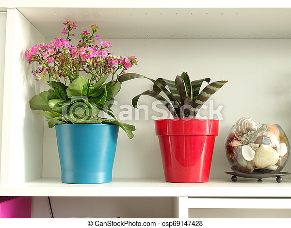 Interior Shelf with Red and Blue Flower Pots - csp69147428