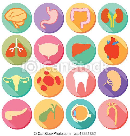 Internal organ and body parts. Illustration of set of internal organ ...