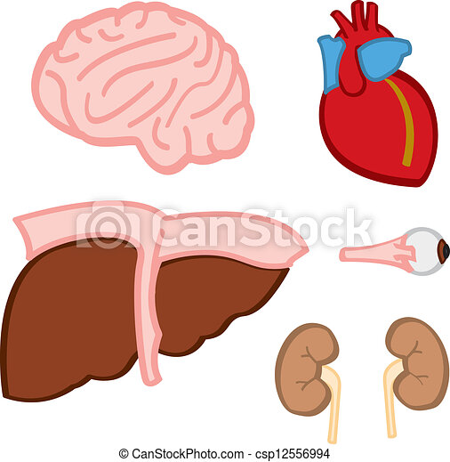 Internal organs. A cartoon, stylized depiction of various vital ...
