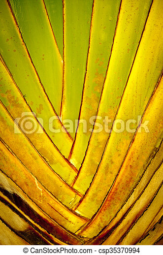 Interwoven leaves of banana palm branch - csp35370994