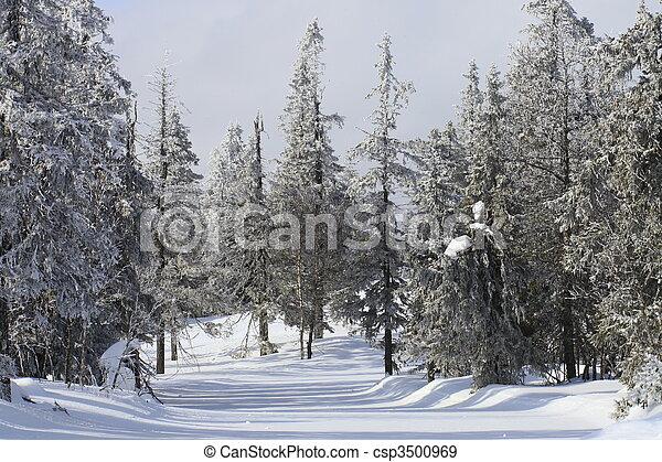 inverno - csp3500969