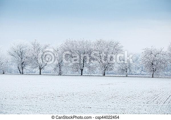 inverno, geada, -, árvores, campo, paisagem, fila - csp44022454