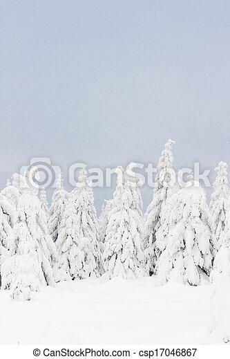 inverno, orlicke, tcheco, árvores, república, montanhas - csp17046867