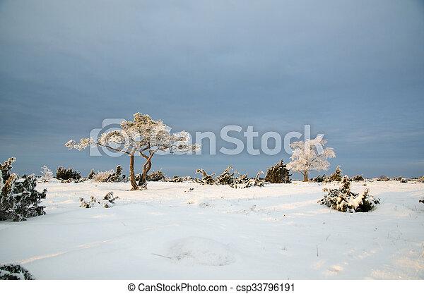 inverno, planície, árvores, gelado, paisagem, vista - csp33796191